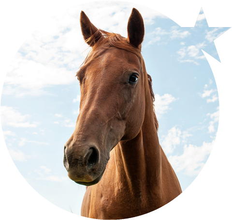 Shooting Star Equine Therapy Horse Cash