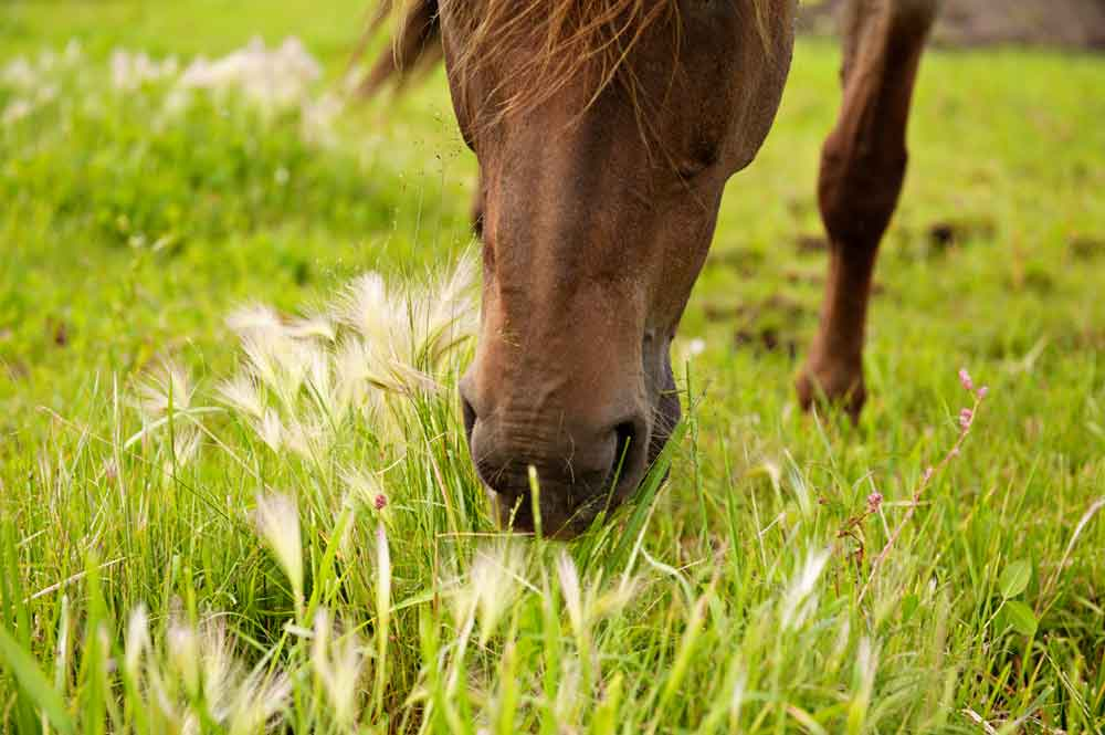 Equine Therapy Horse - April