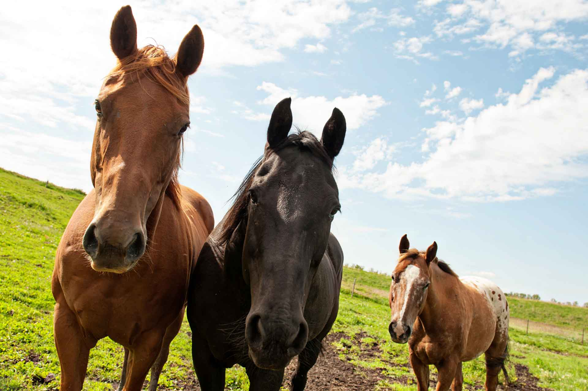 Equine therapy horses, Spice, Laddie and Cash.
