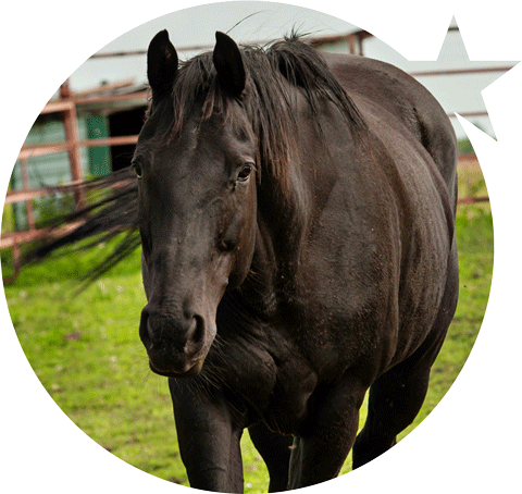 Shooting Star Equine Therapy Horse Spice